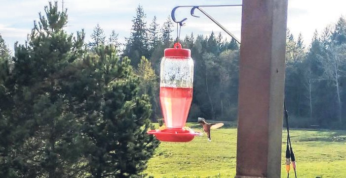 photo of hummingbird feeder